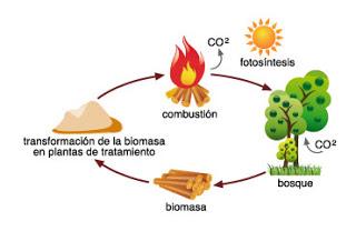 ciclo-de-biomasa